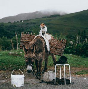 Interventi assistiti con animali